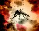 Zika image crop640