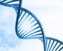 DNA分子
