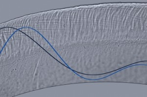 This optical microscope image depicts wave motion in a cross-section of the tectorial membrane, part of the inner ear. This membrane is a microscale gel, smaller in width than a single human hair, and it plays a key role in stimulating sensory receptors of the inner ear. Waves traveling on this membrane control our ability to separate sounds of varying pitch and intensity.    Image courtesy: MIT's Micromechanics Group