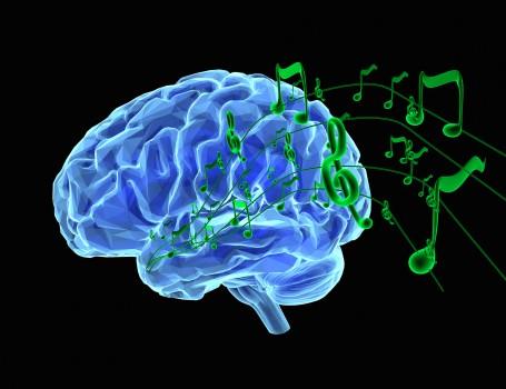 Understanding Brain Mechanisms Of >> Npr Profiles Research Of Brain Mechanisms Involved In Processing