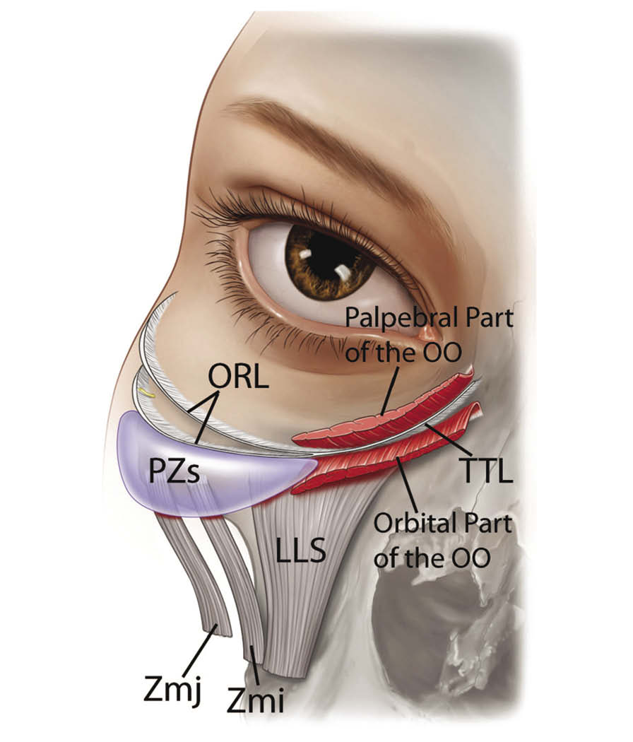 THE EYES: When One Plus One Equals Three - Plastic Surgery Practice