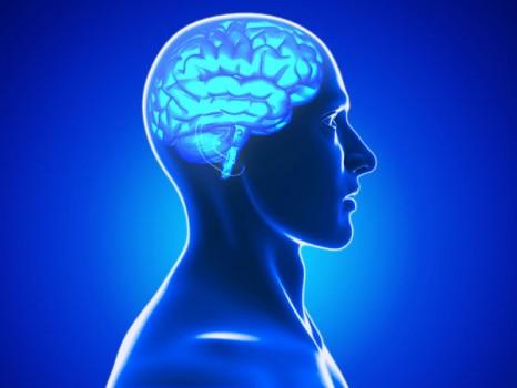 Understanding Brain Mechanisms Of >> Targeting Abnormal Brain Mechanisms May Lead To Pain Management For