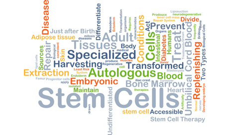 http://www.dreamstime.com/royalty-free-stock-image-stem-cells-background-concept-wordcloud-illustration-image59328116