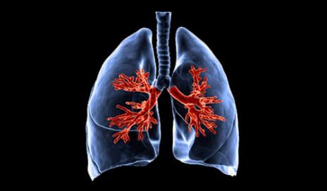 lung-3D-500