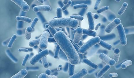 bacteria-blue-500