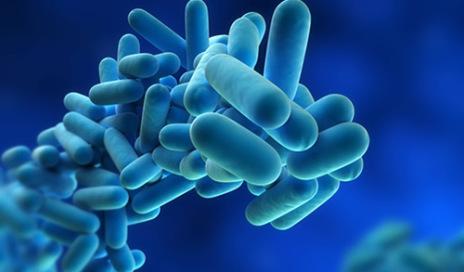 bacterium-legionnella-500