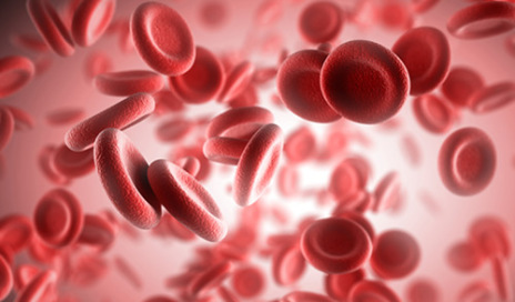 red-blood-cells-m-500