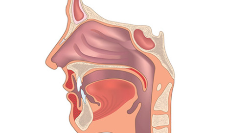 sinus-nasal-500