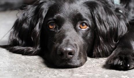 dog1-500