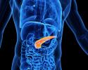 pancreas insulin