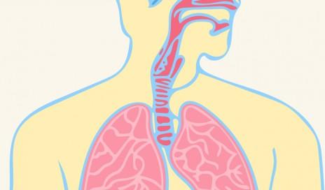 respiratory rhythm