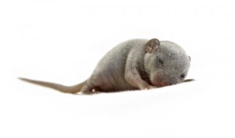 sleep wake mouse