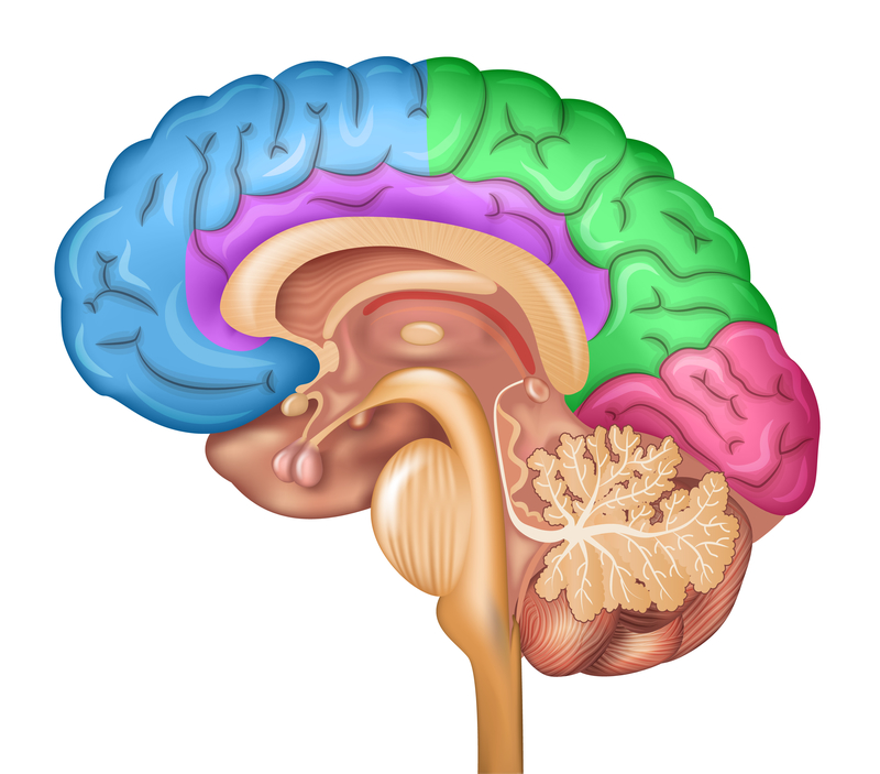 Mathematical Model Could Improve Understanding of Memory ...