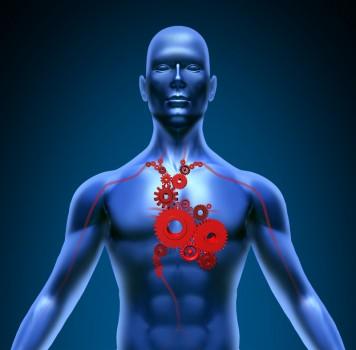Short-term Sleep Deprivation Affects Heart Function - Sleep Review