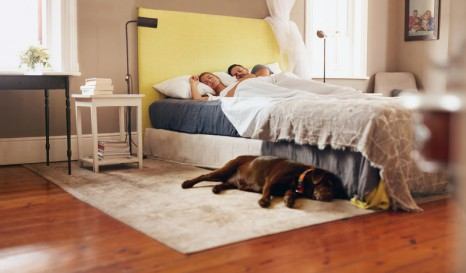 Do you sleep with your dog? You should probably read this