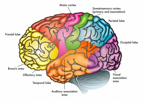 Restless Legs Syndrome Brain Stimulation Study Supports Motor Cortex ...